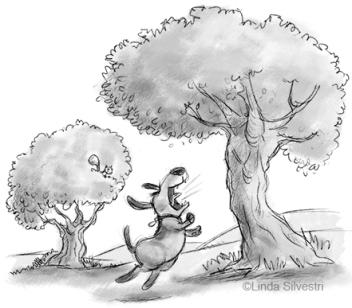 barking-up-the-wrong-tree-450